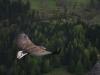 1birds_b