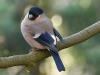 20birds_b