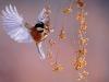 27birds_b