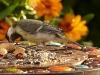 37birds_b