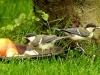 3birds_b