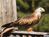 bird-of-prey-2171316_1920