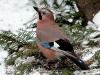 1522018_birds