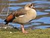 1622018_birds