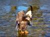 1722018_birds