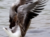 1922018_birds