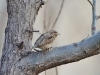 2422018_birds
