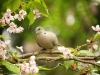 2622018_birds