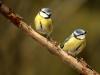 2822018_birds