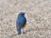 3222018_birds