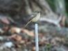 3422018_birds