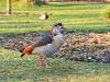 422018_birds