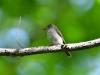4522018_birds