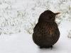 4722018_birds