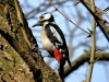 522018_birds