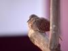 5622018_birds