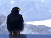 6322018_birds