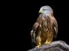 7222018_birds