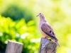 7922018_birds