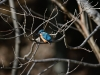 8122018_birds