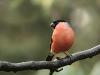 8522018_birds