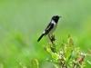8722018_birds