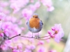 8822018_birds