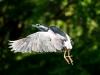 9022018_birds