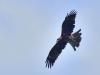 9622018_birds