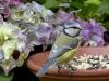 bird-1685883_1920