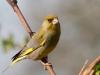 bird-1700498_1280