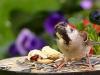 bird-1703804_1280