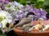 bird-1703811_1920