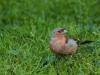 bird-655283_1920