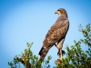 bird-of-prey-1544985
