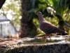 pigeon-1695710_1920
