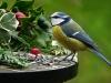 40bird