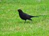 11bird
