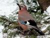 15bird