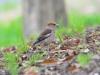 60bird