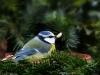 70bird