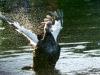 8bird