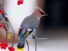 ptaci2018_38