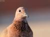 ptacek101