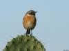 ptacek105