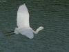 ptacek137