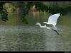 ptacek138