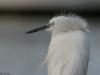 ptacek151