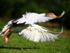 ptacek153