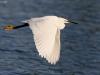 ptacek154